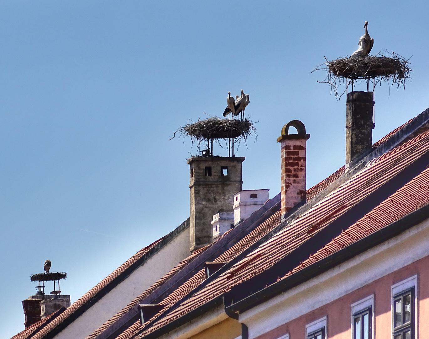 Rust neusiedlersee störche  Rust - Stadt der Störche Foto & Bild | world, österreich, vögel ...