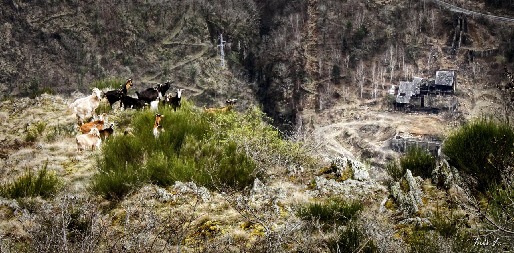 Ruta del Hayedo de Carlac, Val d'Aran.