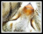 Rêve de chat