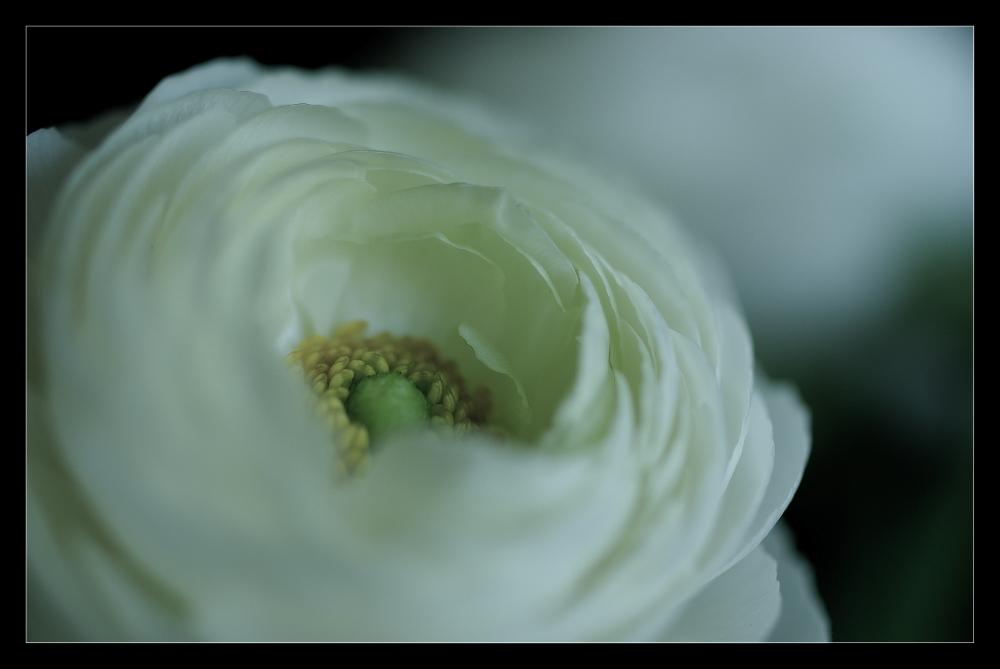 Rêve en blanc
