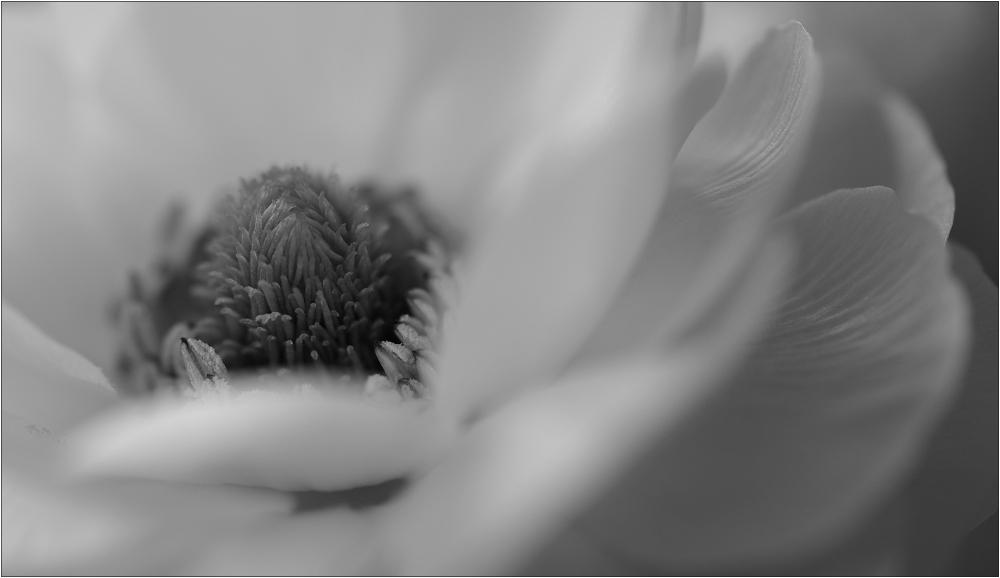 Rêve en blanc (II)