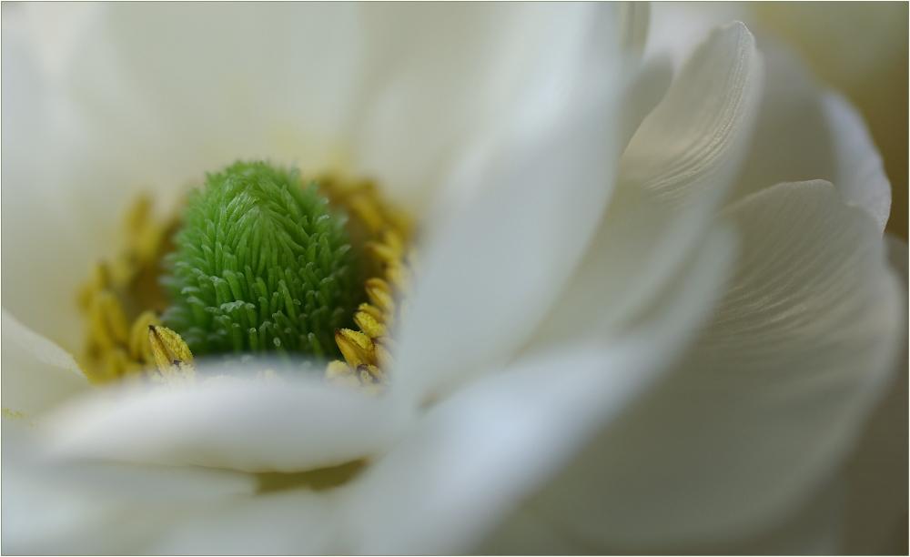 Rêve en blanc (III)