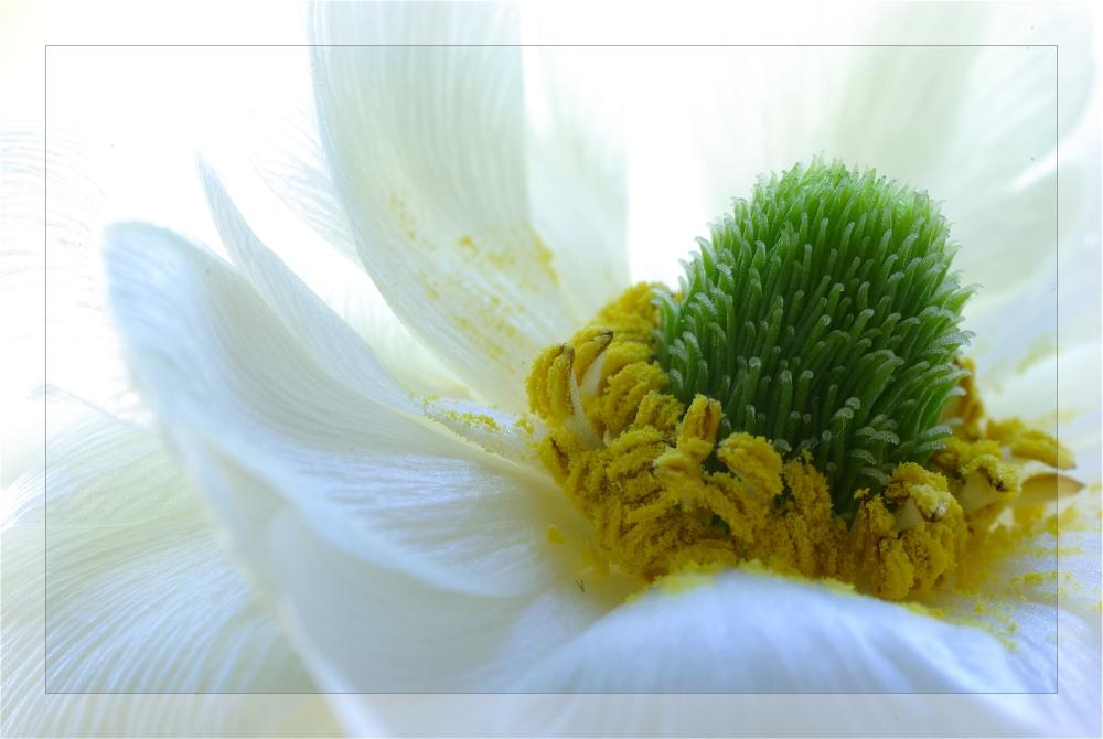 Rêve en blanc (V)