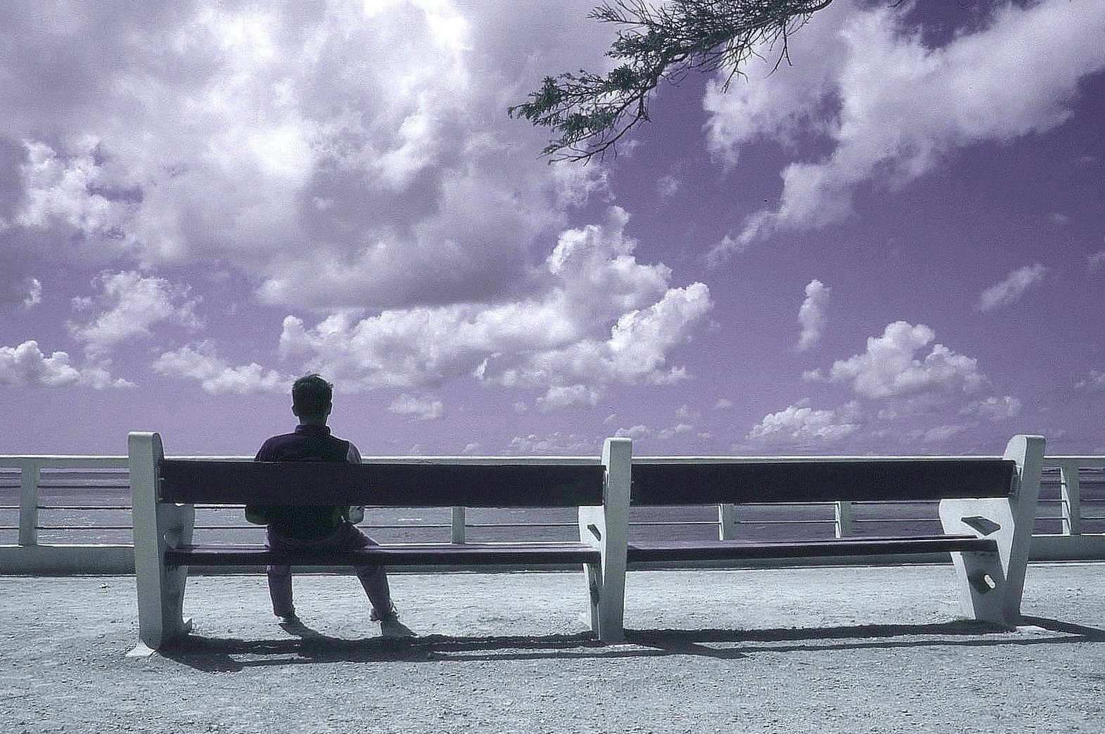 Rêver devant la mer