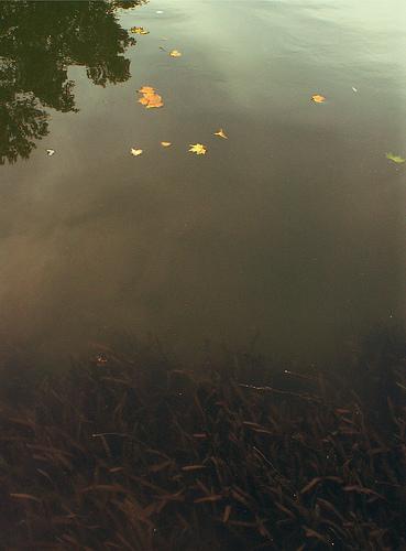 Rythme ternaire: la Garonne à l'automne.