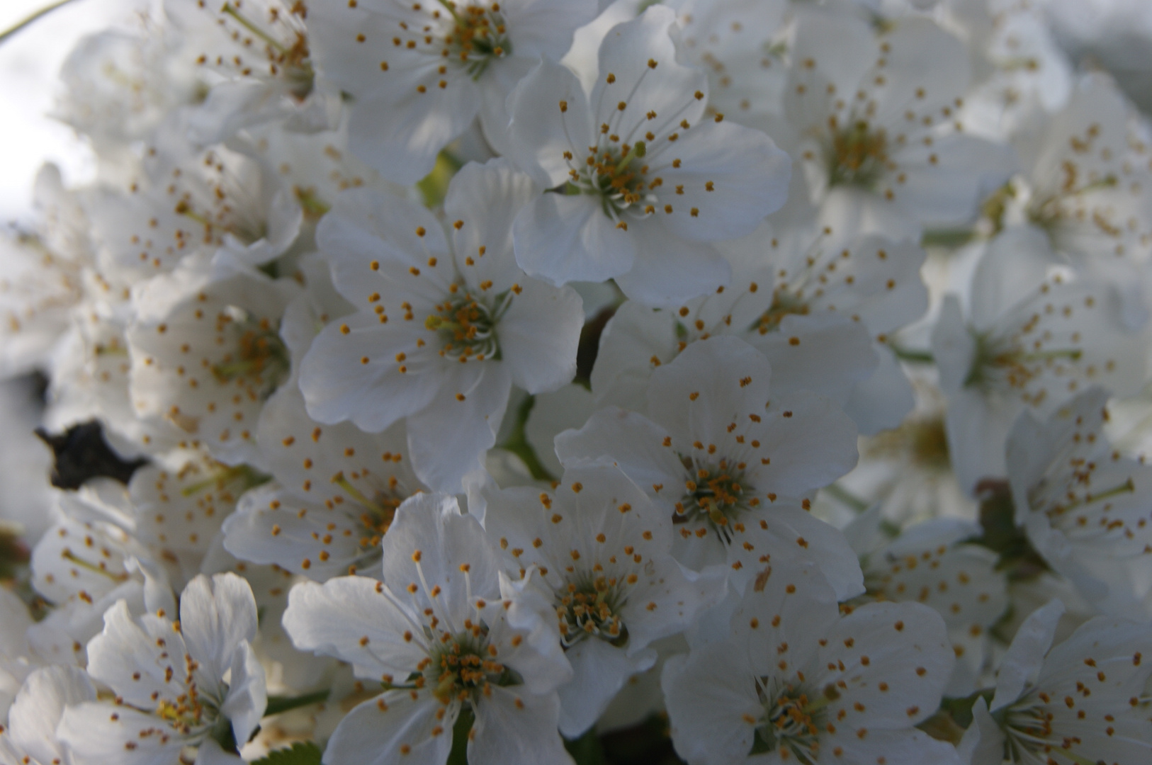 s ` íst Blütenzeit