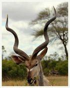 SA #4 - Kudu