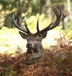 ...Sa Majesté de la forêt..
