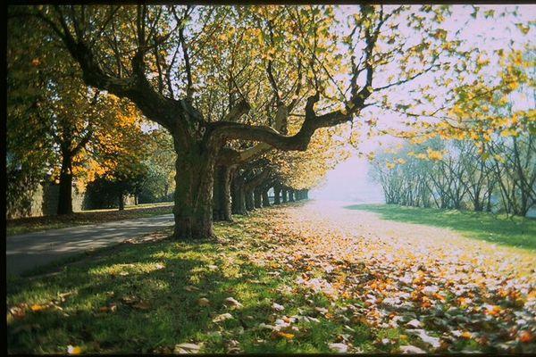 Saarbrücker Staden im Herbst