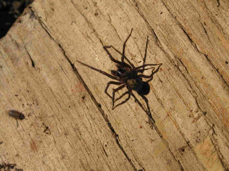 Saarländische Spinne beim Sonnen