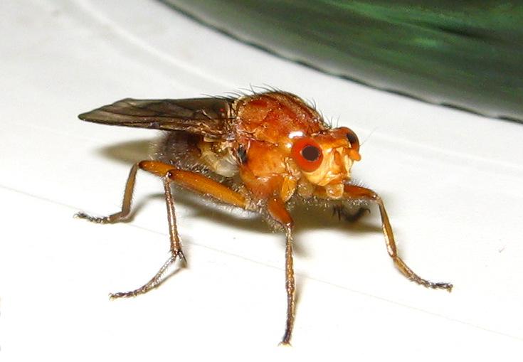 sabbernde Fliege, oder? - ;-)))