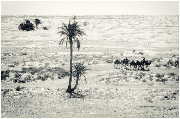 Sabbia Cammellata