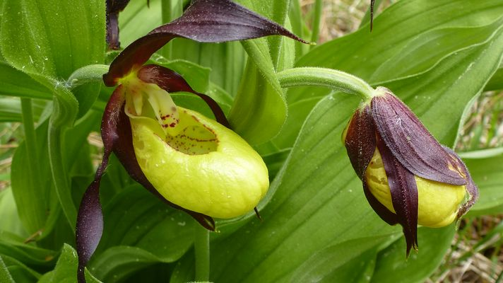 macro orchid es images photos. Black Bedroom Furniture Sets. Home Design Ideas