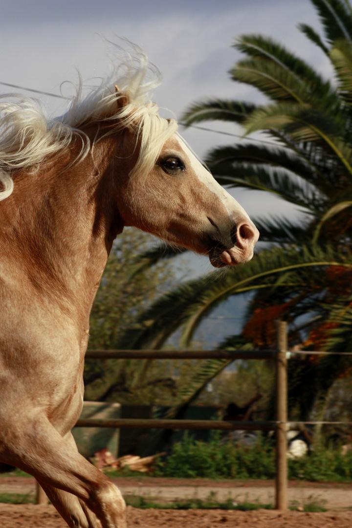 Sabrinas Barbie-Pferdchen
