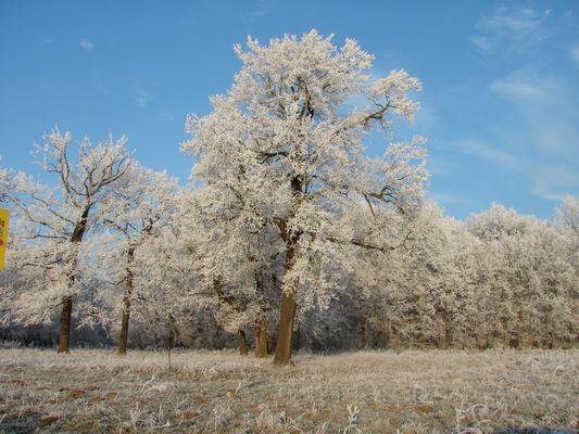 Sachsen - ein Wintermärchen