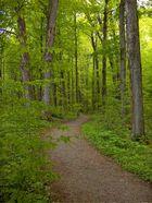 Sacred Grove2, NY