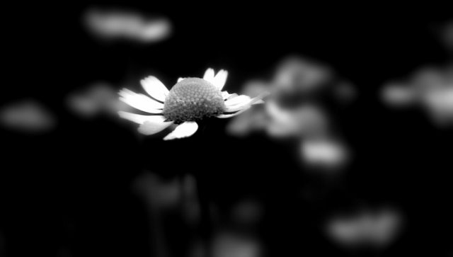 sad and alone flower(1)...