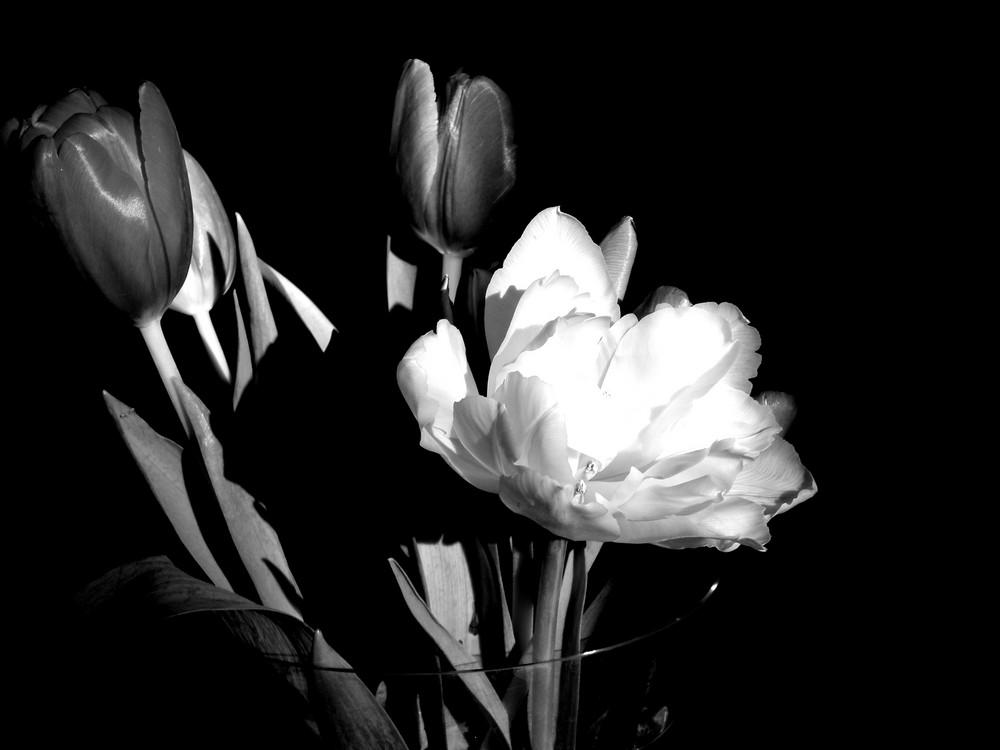 sad flowers....