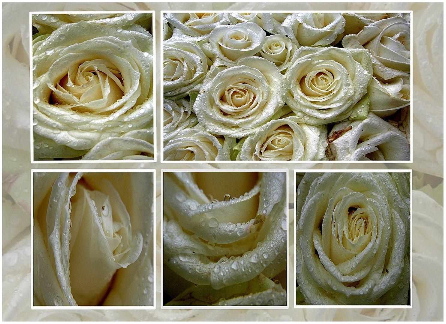 sad rose's