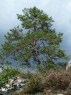Sächsische Schweiz 5