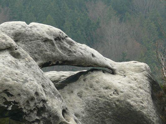 Sächsischer Urzeitvogel