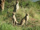 Safari, aber nicht im Kruger