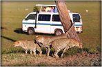 SAFARI au KENYA - 6 -