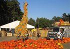Safari einmal anders