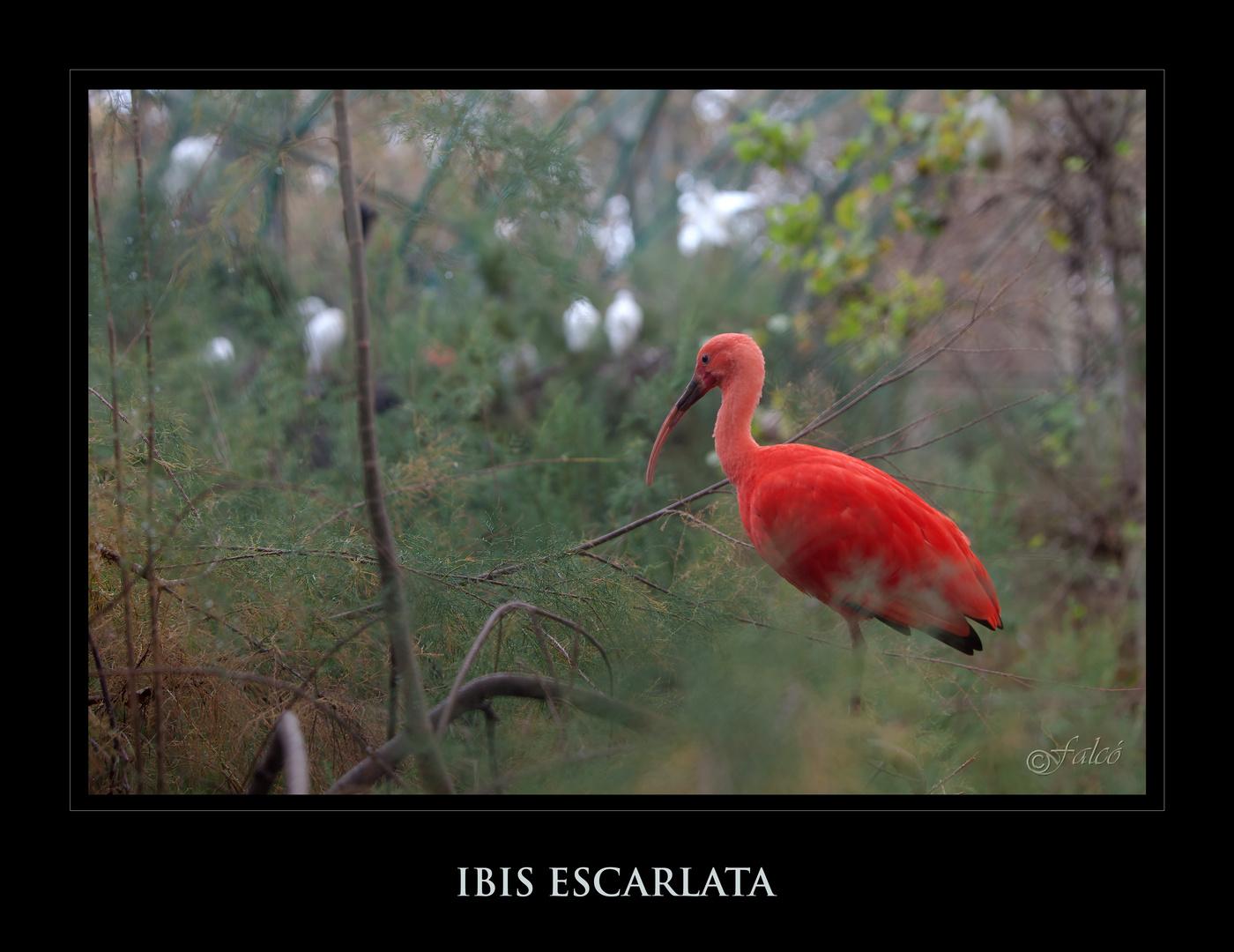 Safári fotográfico Zoo de BCN - I