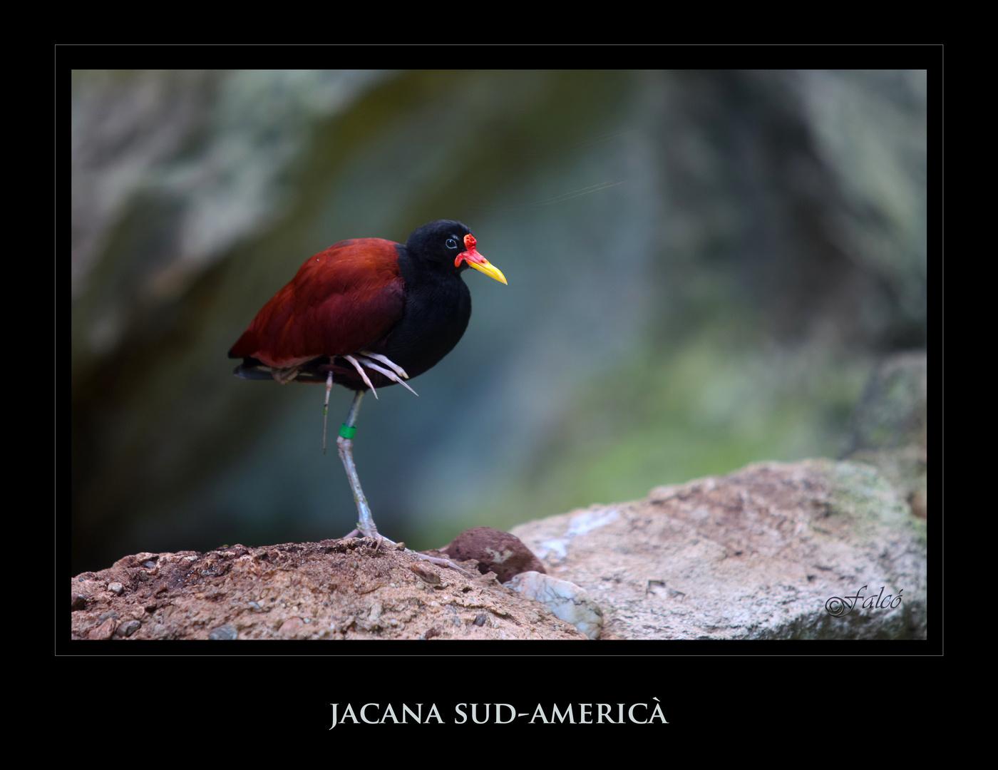 Safári fotográfico Zoo de BCN - III