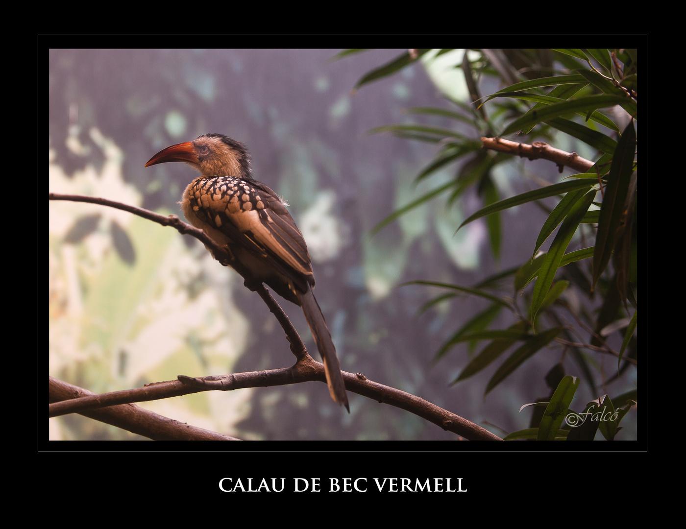 Safári fotográfico Zoo de BCN - IV
