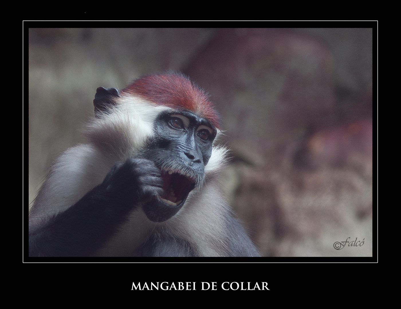 Safári fotográfico Zoo de BCN - VI