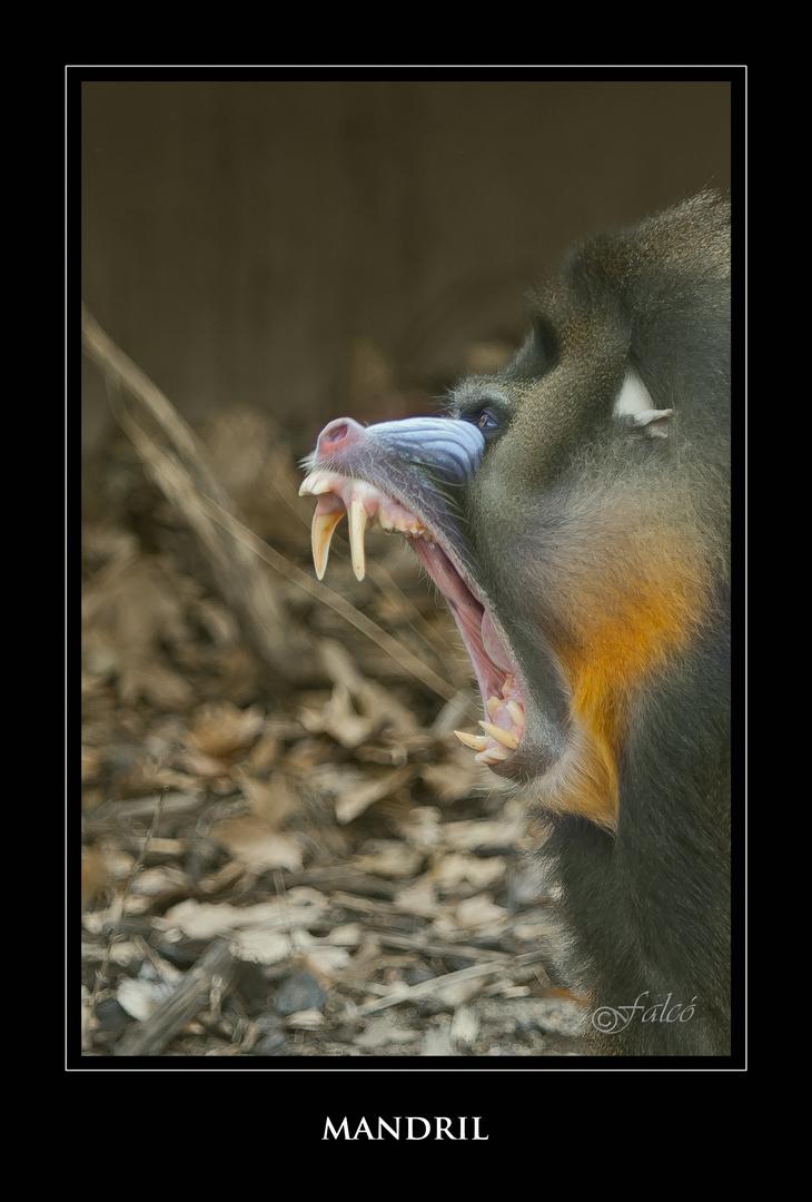 Safári fotográfico Zoo de BCN - VIII