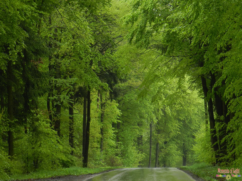 Saftiges Grün im Regen