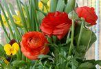 sag es mit Blumen, mit..........