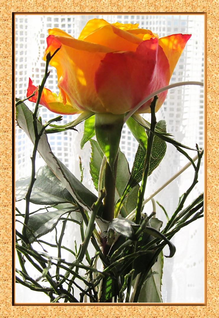 Sag es mit einer Rose