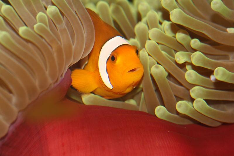 Sag ja nicht Nemo zu mir ;-)