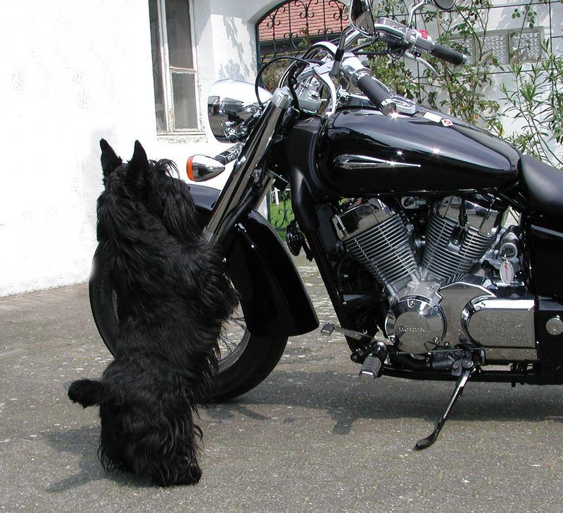 Sag mal, wieviel PS hat das Moped?