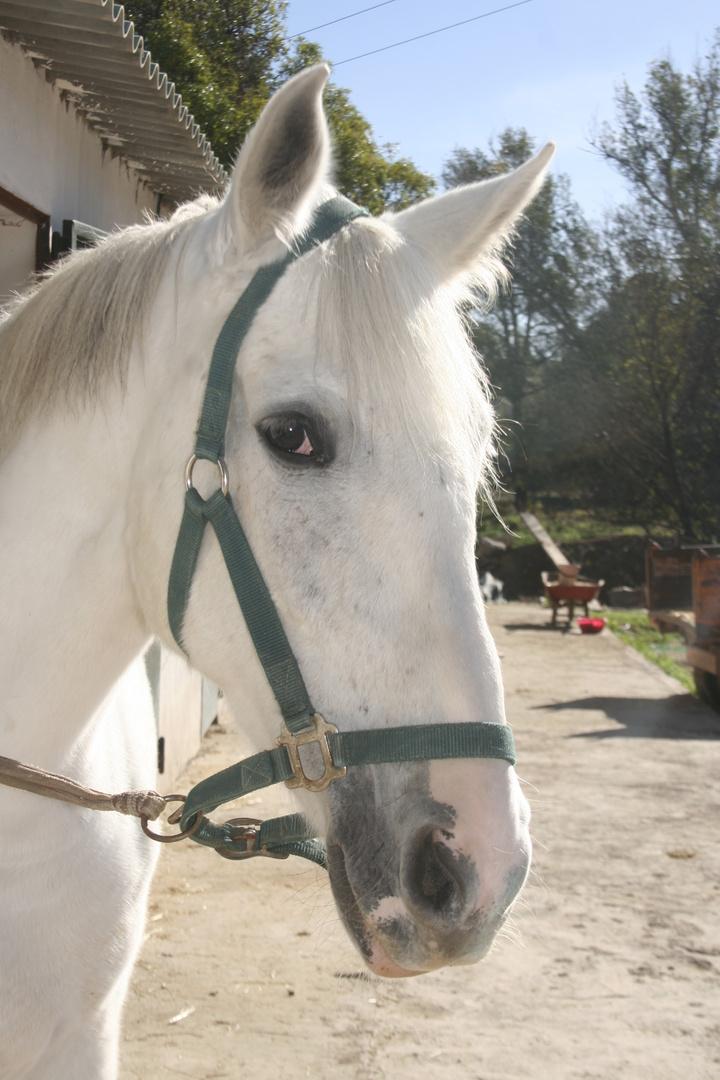sage cheval