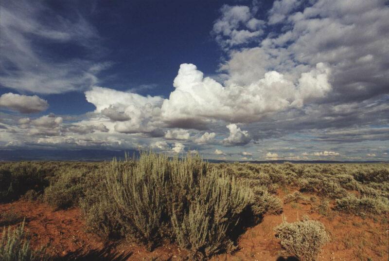 Sagebrush & Clouds