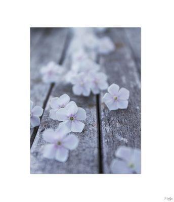 *Sag`s mit Blumen*
