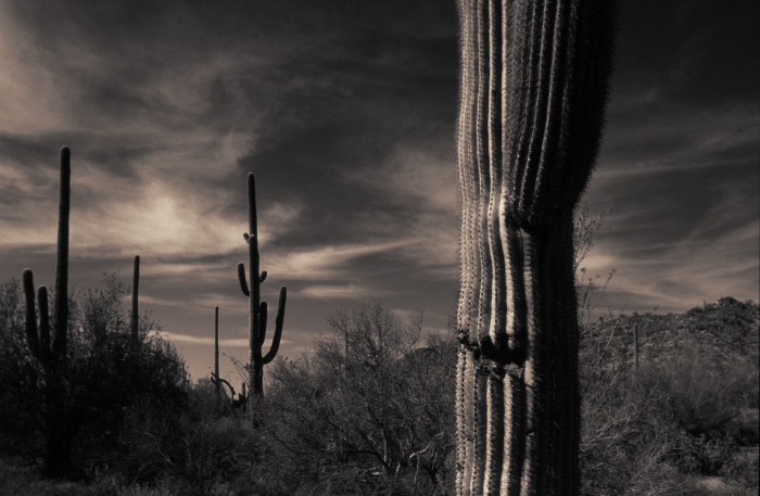 Saguaro National Monument, AZ