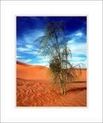 Sahara (2)