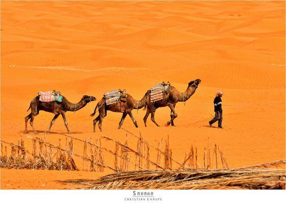 * Sahara *