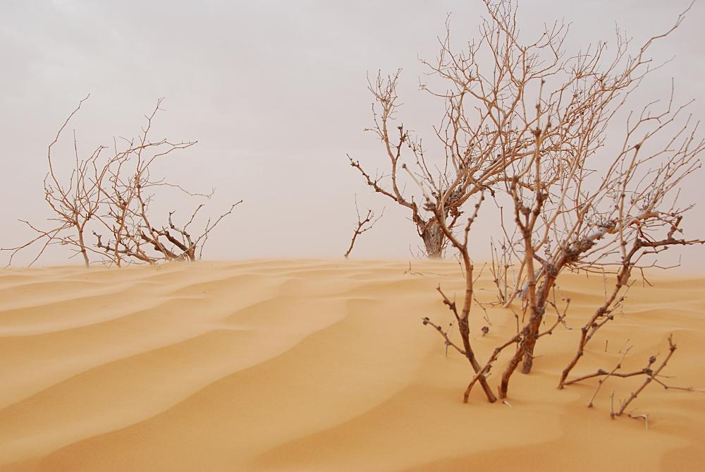 Sahara, Tunesien