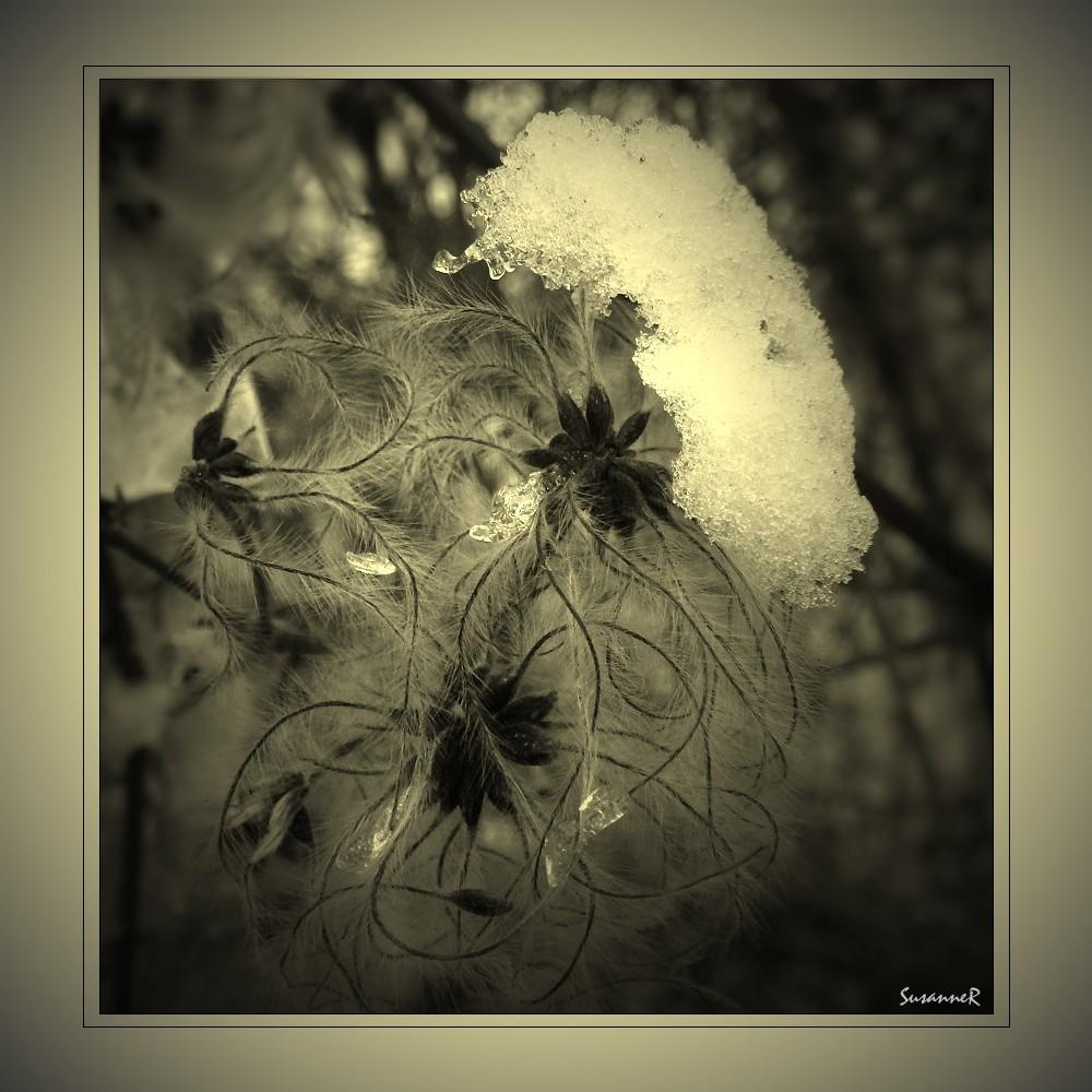 Sahnehäubchen