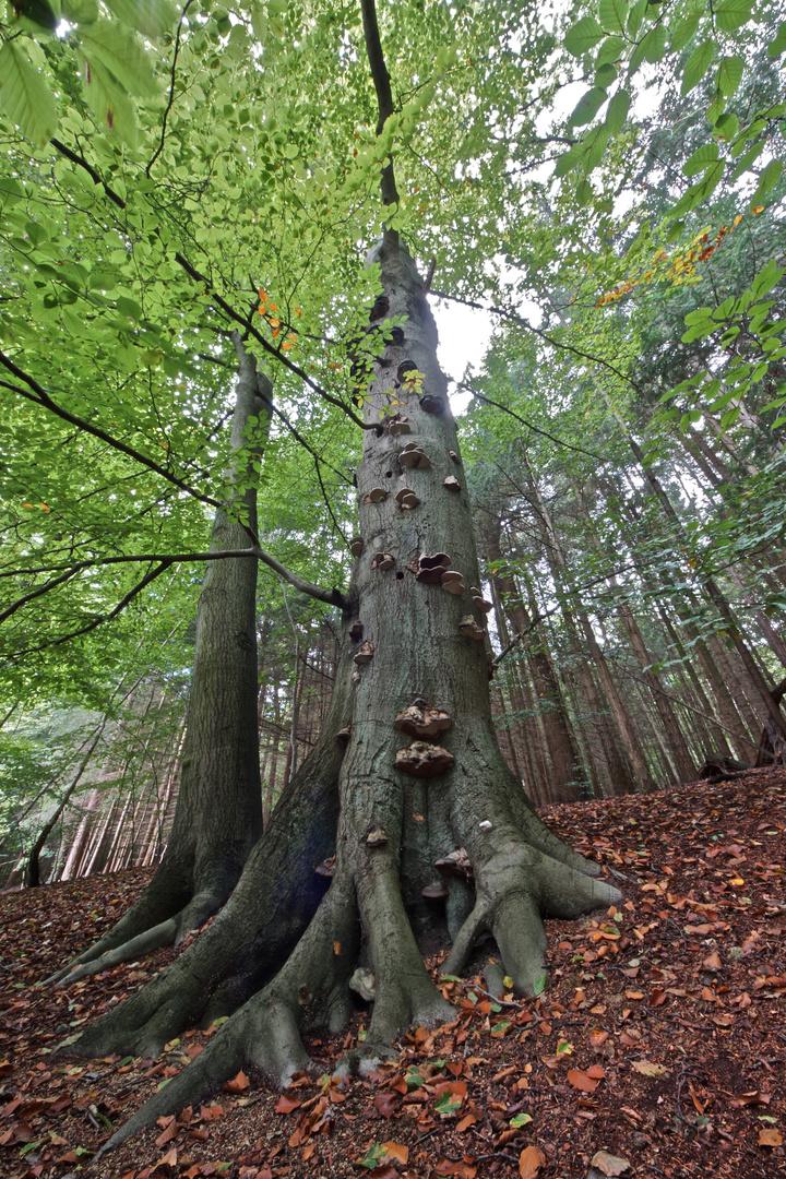 Sahsenwald im Spätsommer