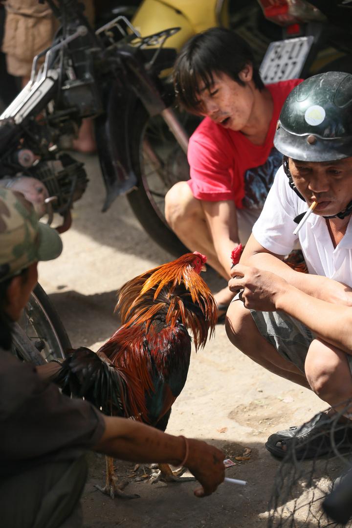 Saigon Kampfhuhnhändler
