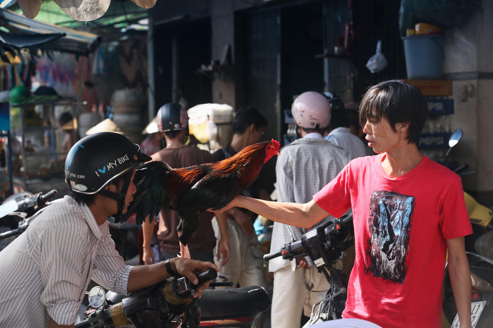 Saigon, stolzer Kampfhuhnhändler