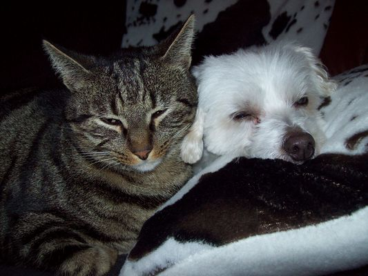 s'aimer comme chien et chat